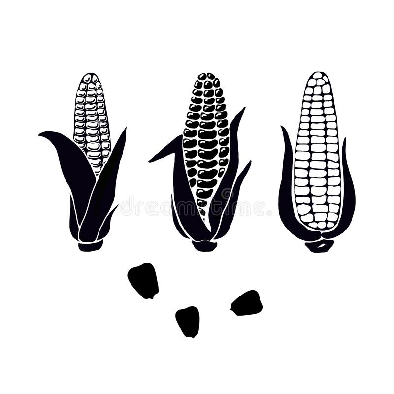 Hand drawn set of black silhouette corn cobs and grains on white background. vector illustration