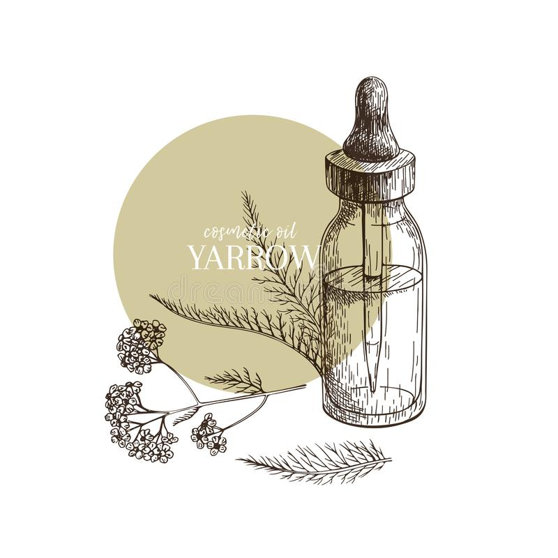 Hand drawn set of essential oils. Vector yarrow milfoil flower. Medicinal herb with glass dropper bottle. Engraved art. Good for cosmetics, medicine, treating stock illustration