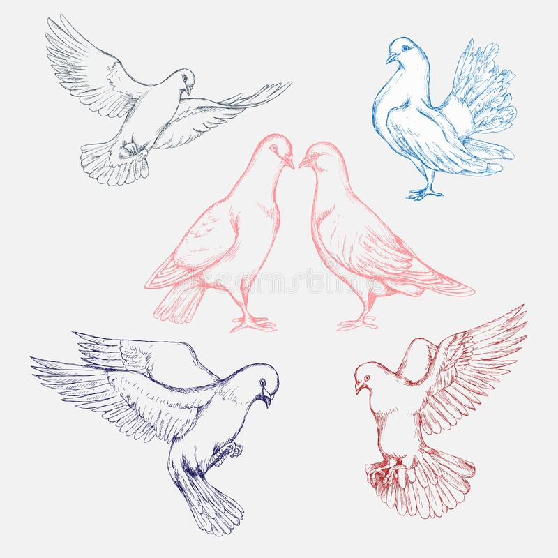 Hand-drawn set of pigeons in different poses.  Engraving art. bird for banner and advertising by cross hatching, contour hatching vector illustration