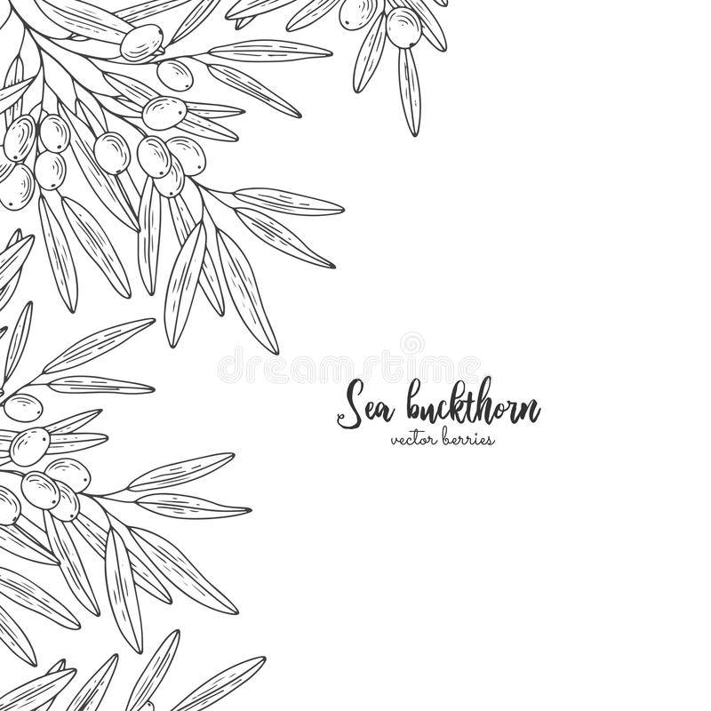 Hand drawn set with sea buckthorn. Design for package of health and beauty natural products. Detailed frame with berries. Applicab vector illustration