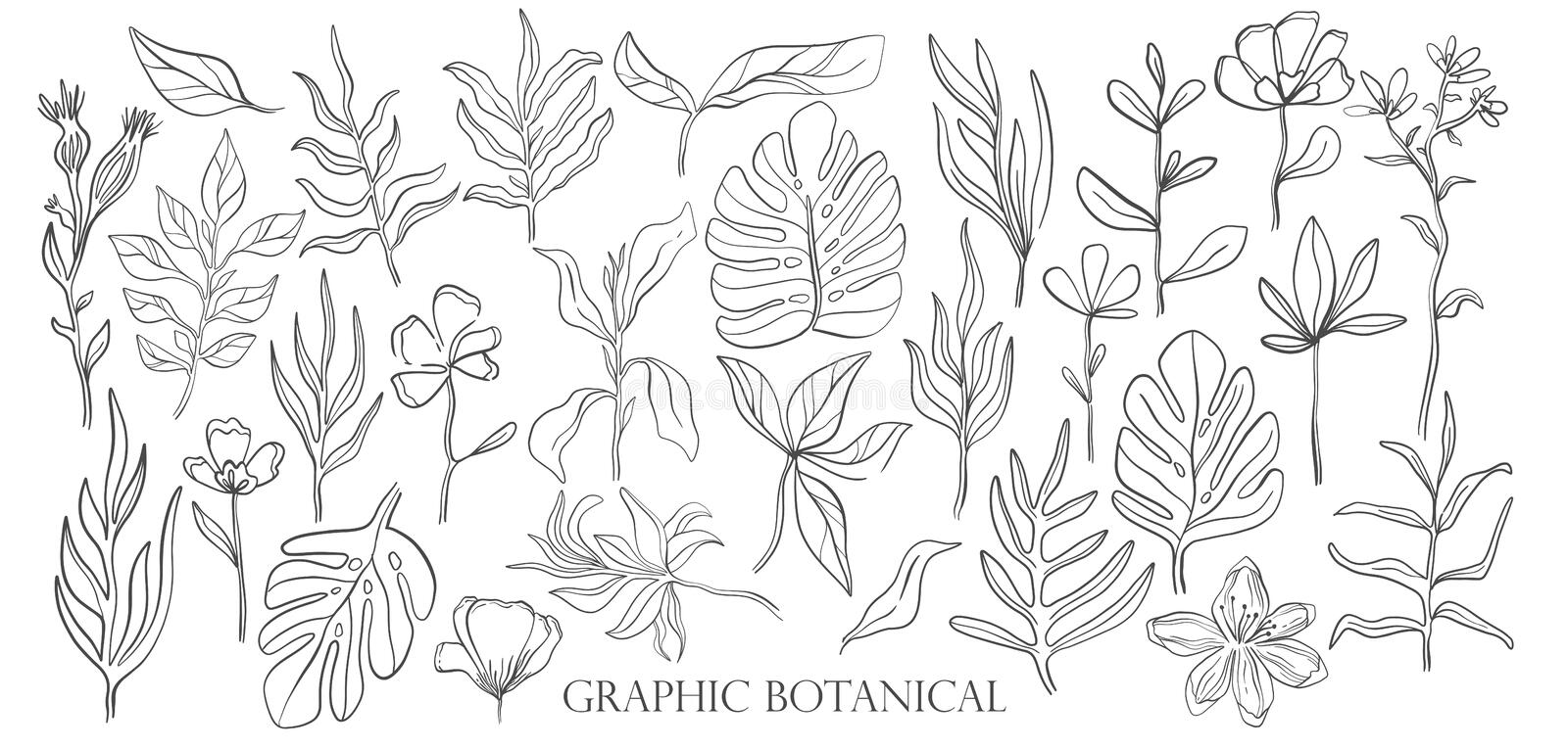 Hand drawn set sketch style Wild flowers . Line nature style,Drawing flora,hand drawn botany. Vector illustration vector illustration
