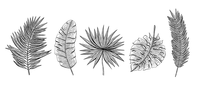 Hand drawn set with tropical leaves chamaerops, banana palm, chamaedoria, monstera, areca palm. Design elements for invitations, g stock illustration