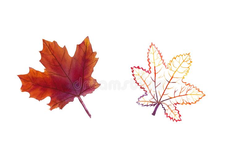 Hand-drawn set of watercolor maple leaves royalty free illustration