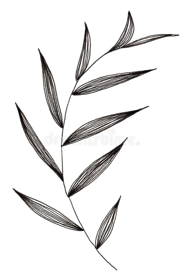 Hand drawn of simple leaf and foliage branch isolated on white background using black ink pen for design purpose. Hand drawn of simple leaf and foliage branch stock illustration