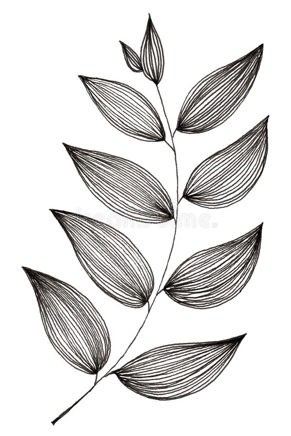 Hand drawn of simple leaf and foliage branch isolated on white background using black ink pen for design purpose. Hand drawn of simple leaf and foliage branch royalty free illustration