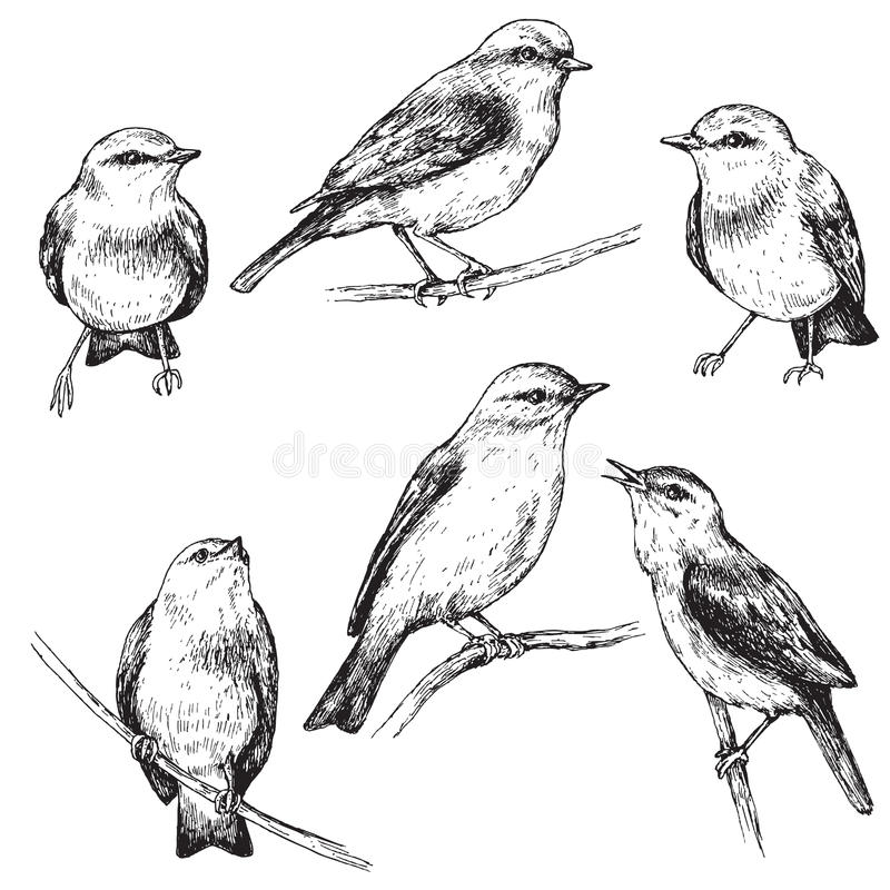 Hand Drawn Sitting Bird Set Stock Vector - Image 73699540