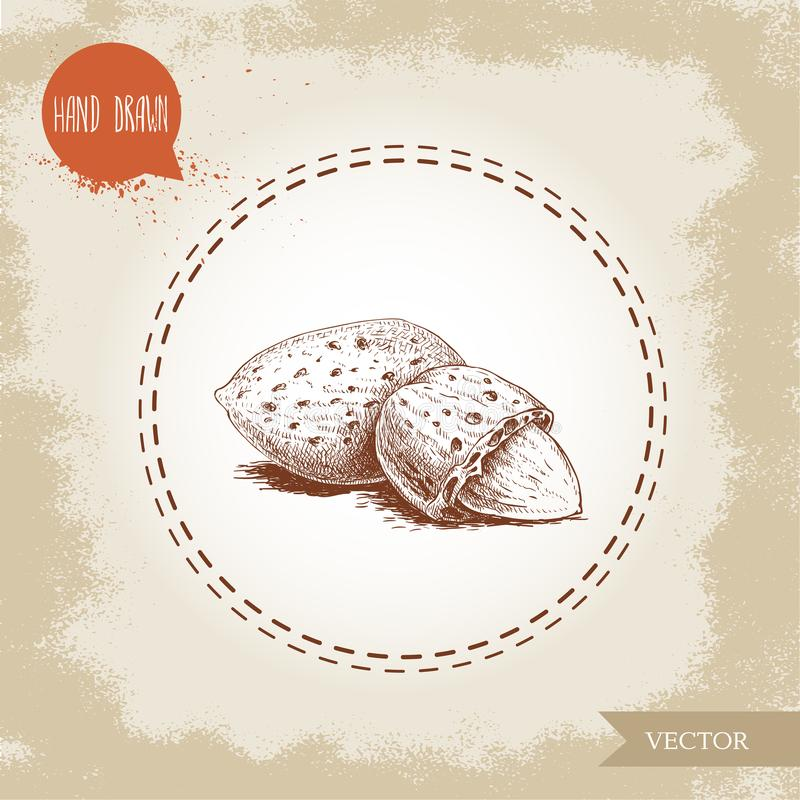 Hand drawn sketch almond nuts. Peeled nuts and nut in nutshell. Group organic superfood isolated on old looking background. Vector illustration vector illustration