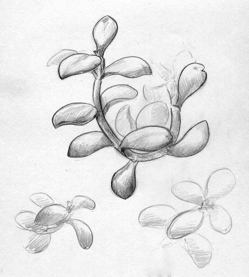 Hand Drawn Sketch Of A Branch Close Up Stock Illustration