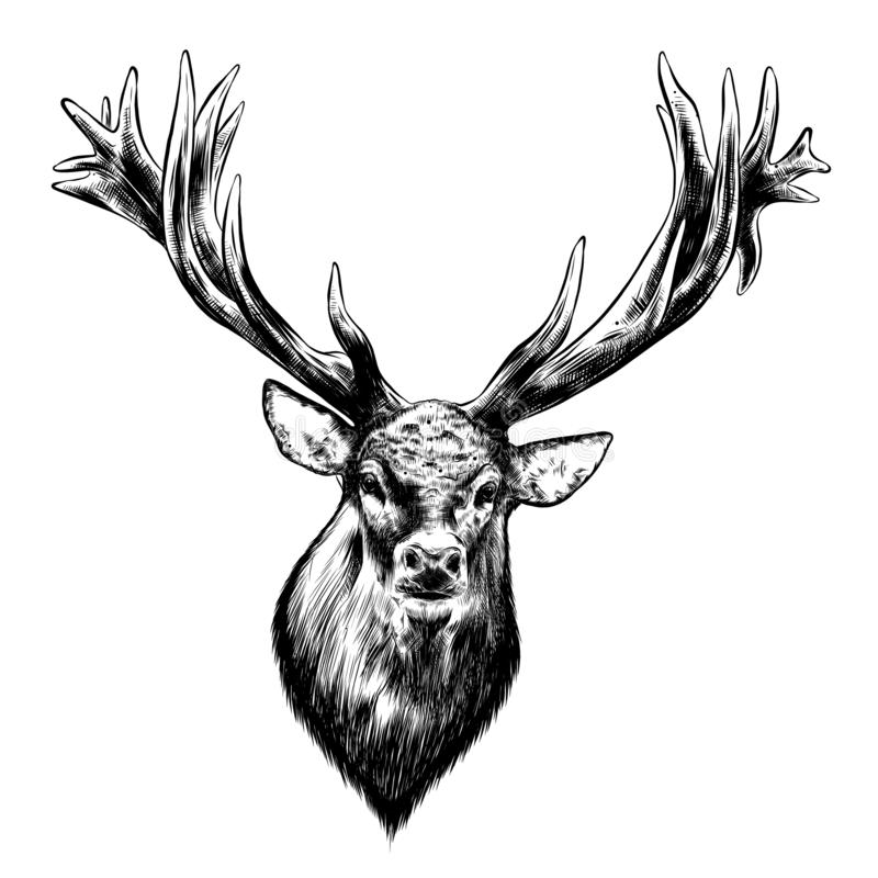 Hand drawn sketch of deer in black isolated on white background. Detailed vintage style drawing. Vector illustration royalty free illustration