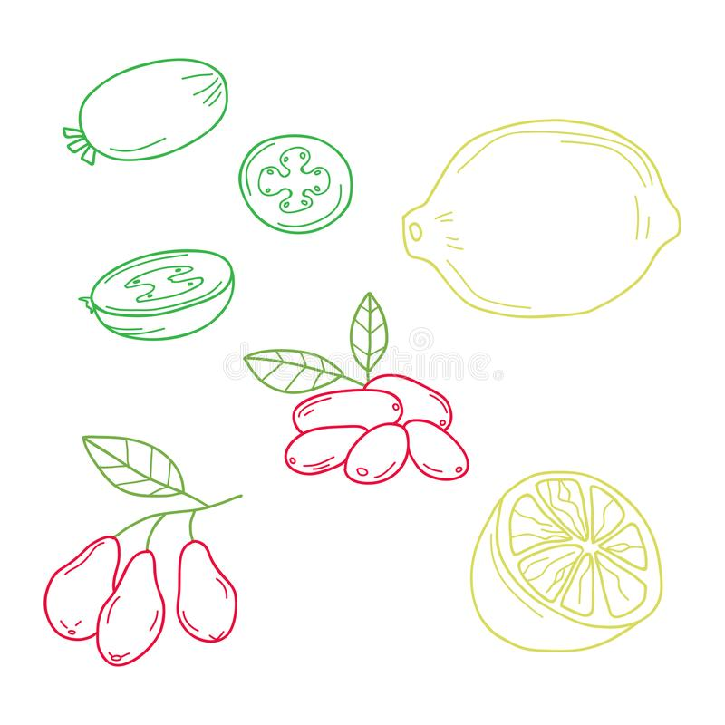 Hand drawn sketch fruits - pineapple guava, lime. dogwood berrie. S. Eco food. Vector set stock illustration