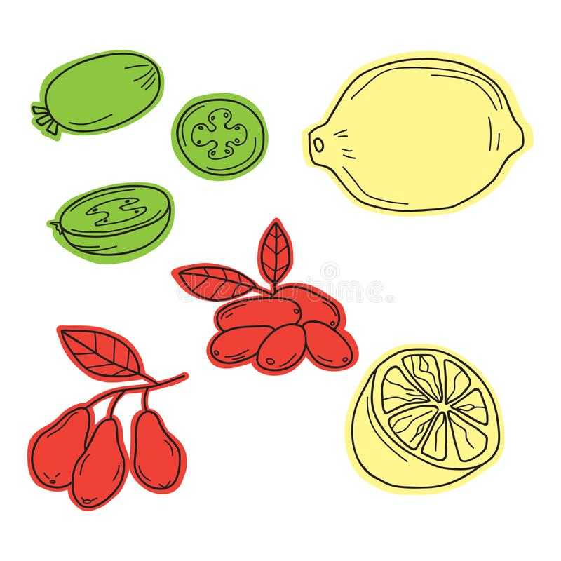 Hand drawn sketch fruits - pineapple guava, lime. dogwood berrie. S. Eco food. Vector set royalty free illustration