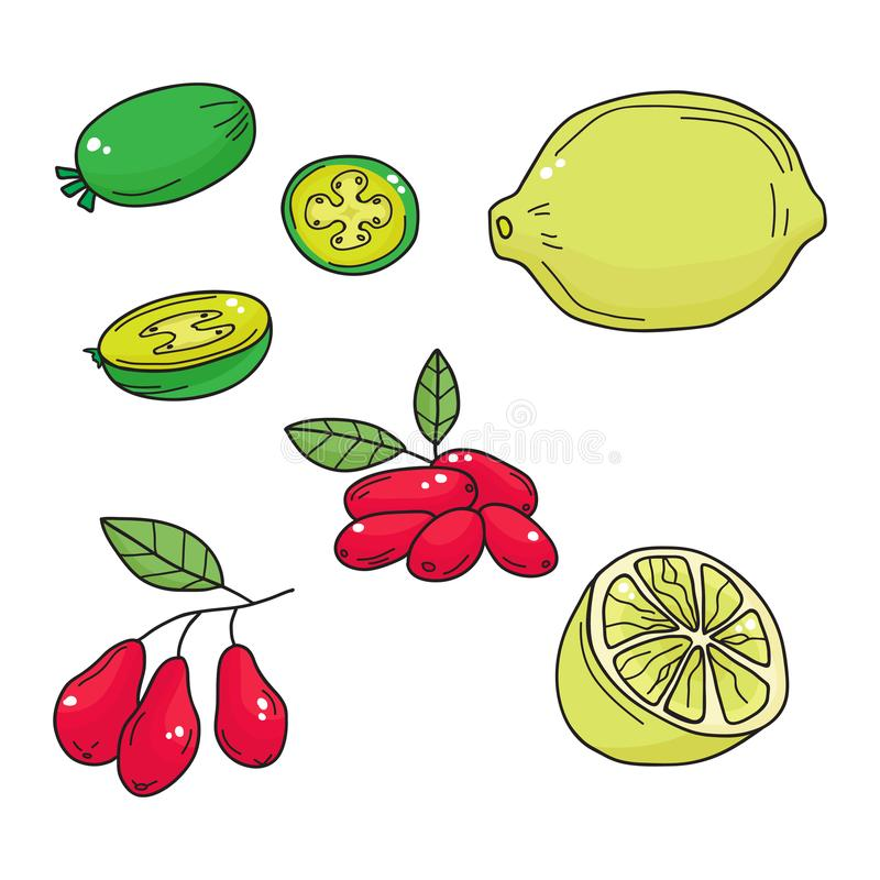 Hand drawn sketch fruits - pineapple guava, lime. dogwood berrie. Hand drawn sketch ts - pineapple guava, lime. dogwood berries. Eco food. Vector set royalty free illustration