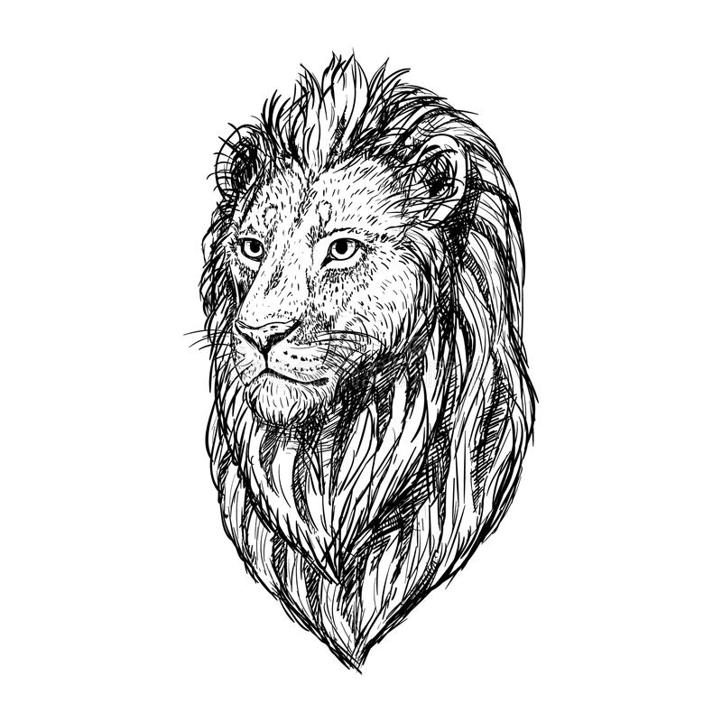 Line Drawing Lion Head : Hand drawn sketch of lion head vector illustration stock