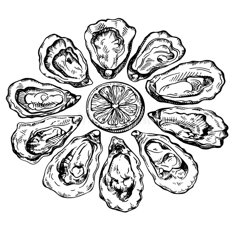 Hand drawn sketch oyster set. Sketch illustration of fresh seafood. royalty free illustration