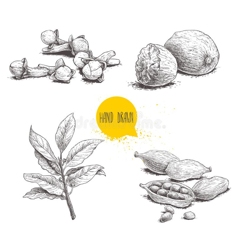 Hand drawn sketch spices set. Bay leaves branch, nutmegs, cardamoms and cloves. Herbs, condiments and spices vector illustration stock illustration