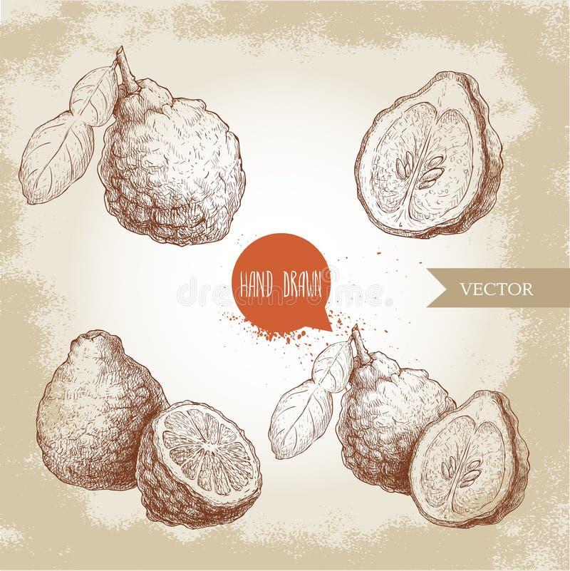 Hand drawn sketch style bergamot fruits set. Kaffir lime whole. With leaf and half vector illustration. Organic food. Citrus collection on vintage background royalty free illustration