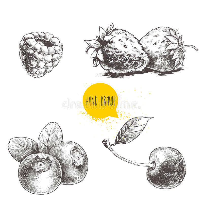 Hand drawn sketch style berries set on white background. Raspberry, strawberry, cherry and blueberry. vector illustration