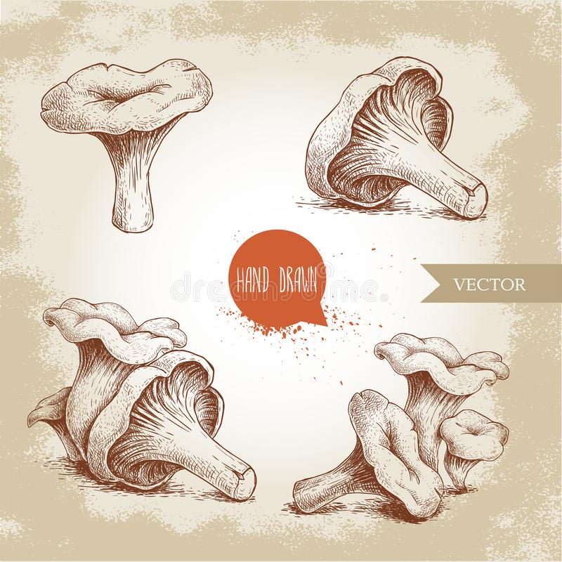 Hand drawn sketch style chanterelle mushroom set. Healthy natural forest food collection. Vector illustration on old back. Ground. EPS10 + JPEG preview royalty free illustration