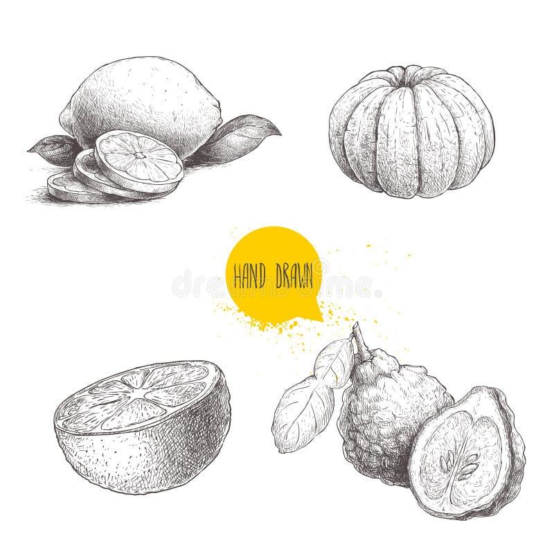 Hand drawn sketch style citrus fruits set. Lemon half, lime, peeled tangerine, mandarin, oranges and bergamots. Vector organic foo. D illustrations isolated on royalty free illustration