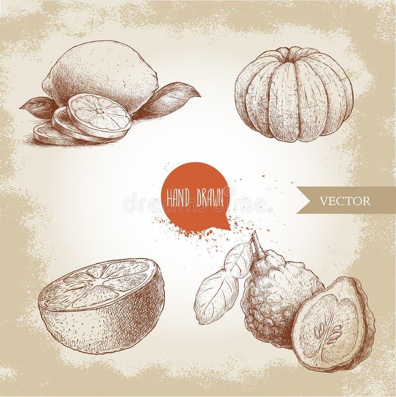 Hand drawn sketch style citrus fruits set. Lemon half, lime, peeled tangerine, mandarine, oranges and bergamots. Vector organic food illustrations stock illustration