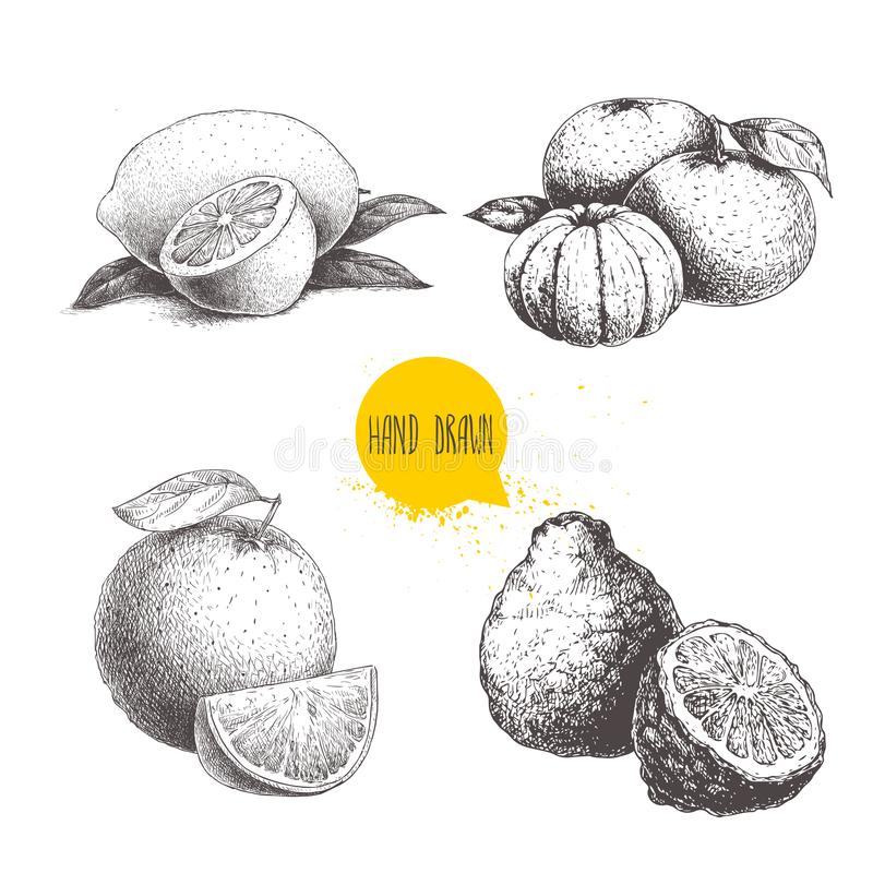 Hand drawn sketch style citrus fruits set. Lemon half, lime, tangerine, mandarin composition, oranges and bergamots isolated on wh. Ite background. Vector royalty free illustration