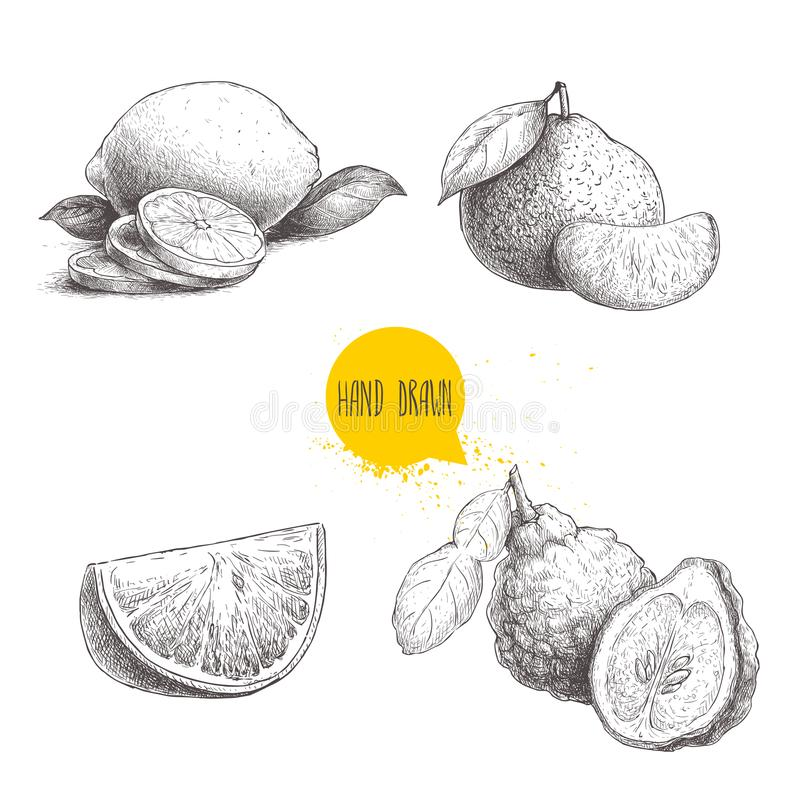 Hand drawn sketch style citrus fruits set. Lemon half, lime, tangerine, mandarin composition, oranges and bergamots. Vector organi stock illustration
