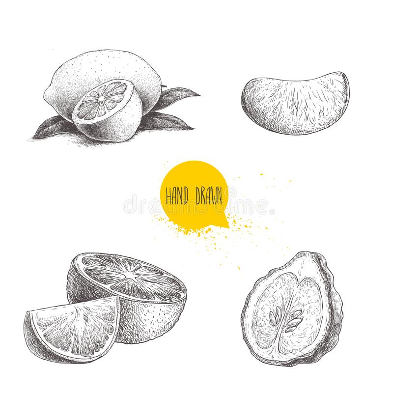 Hand drawn sketch style citrus fruits set. Lemon half, lime, tangerine, mandarin part, oranges and bergamots isolated on white bac. Kground. Vector organic food royalty free illustration