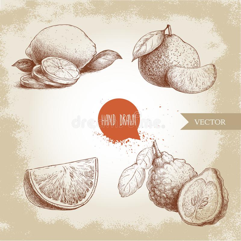 Hand drawn sketch style citrus fruits set. Lemon half, lime, tangerine, mandarine composition, oranges and bergamots. Vector organic food illustrations vector illustration