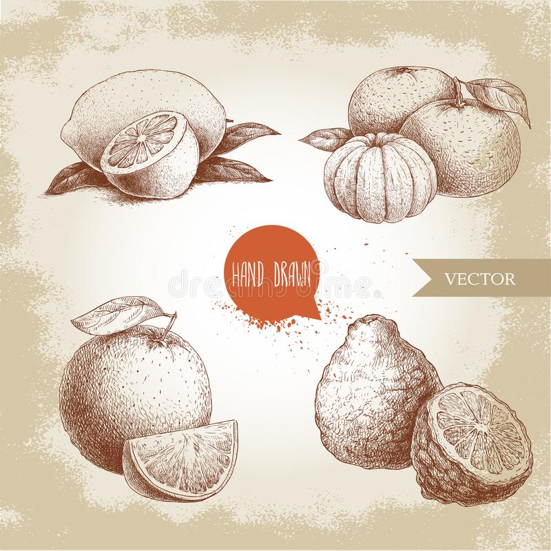 Hand drawn sketch style citrus fruits set. Lemon half, lime, tangerine, mandarine composition, oranges and bergamots. Vector organic food illustrations royalty free illustration