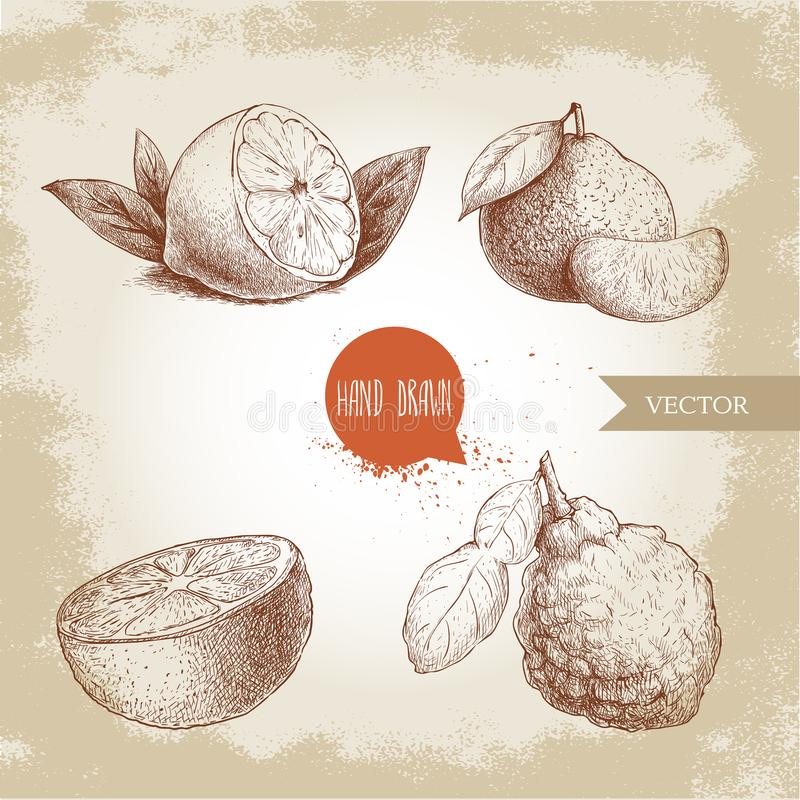 Hand drawn sketch style citrus fruits set. Lemon half, lime, tangerine, mandarine, orange slice and bergamot with leaf. Vector organic food illustrations royalty free illustration