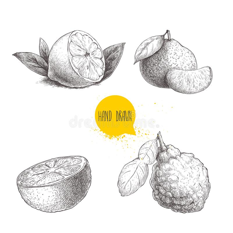 Hand drawn sketch style citrus fruits set. Lemon half, lime, tangerine, mandarine, orange slice and bergamot with leaf. Vector org. Anic food illustrations stock illustration