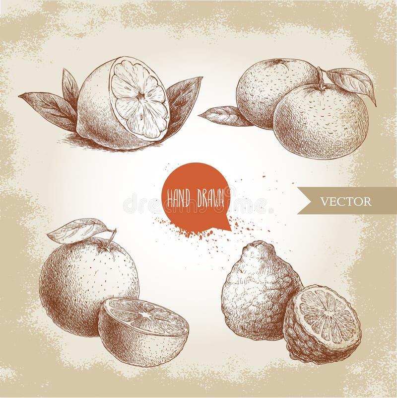 Hand drawn sketch style citrus fruits set. Lemon half, lime, tangerine, mandarine, oranges and bergamots. Vector organic food illustrations stock illustration