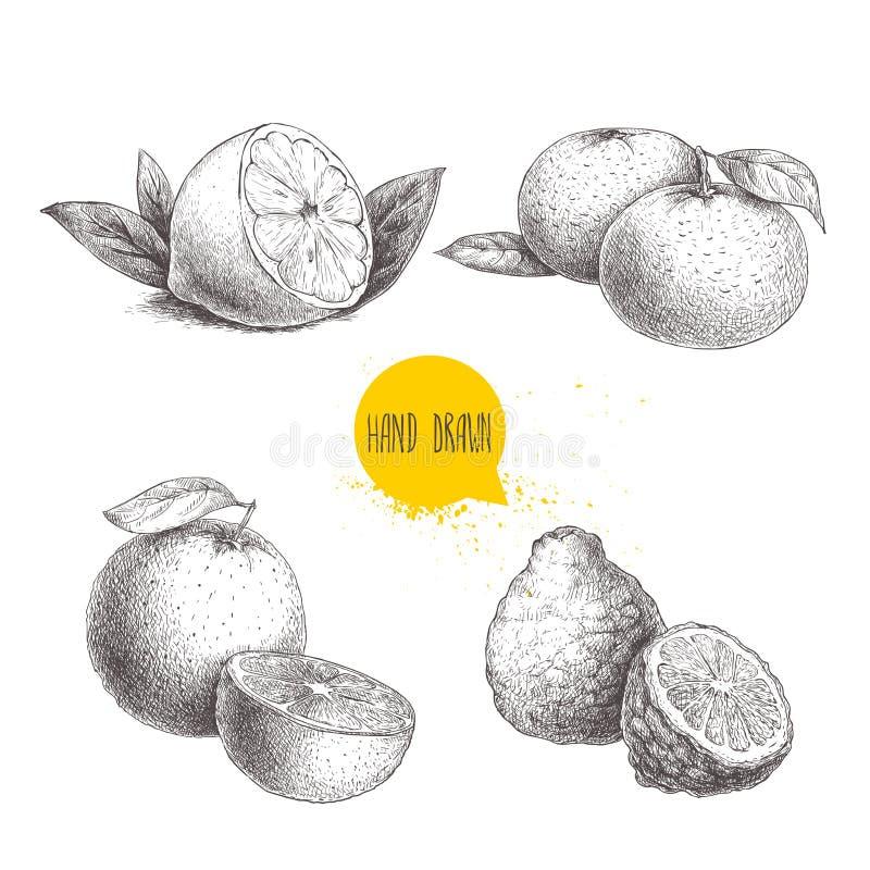 Hand drawn sketch style citrus fruits set. Lemon half, lime, tangerine, mandarine, oranges and bergamots. Vector organic food illustrations vector illustration
