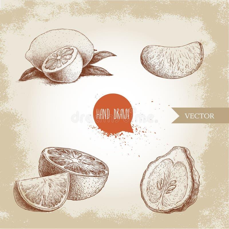 Hand drawn sketch style citrus fruits set. Lemon half, lime, tangerine, mandarine part, oranges and bergamots. Vector organic food illustrations vector illustration