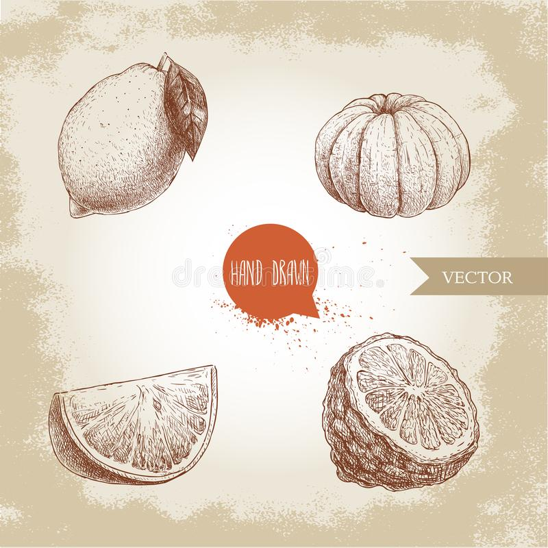 Hand drawn sketch style citrus fruits set. Lemon, lime, peeled tangerine, mandarine, orange slice and bergamot half. Vector organic food illustrations vector illustration