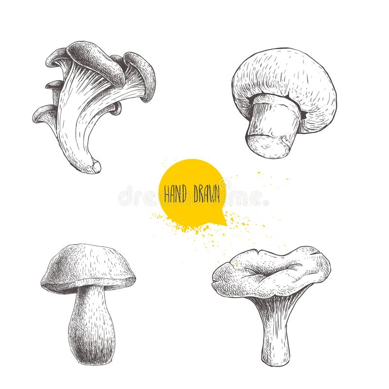 Hand drawn sketch style different forest mushrooms set. Champignon, oyster, chanterelle and porcini mushrooms. Organic eco raw foo. D vector illustrations stock illustration