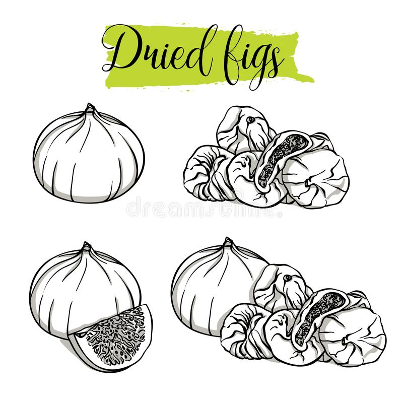 Hand drawn sketch style Fig set. Single, group fruits, slices, dried Figs. Organic food, vector doodle illustrations collection isolated on white background royalty free illustration