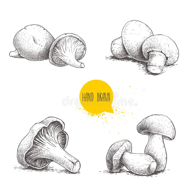 Hand drawn sketch style fresh fram mushrooms compositions set. Champignons, oysters, chanterelles and porcini mushrooms. Organic e. Co raw food vector vector illustration