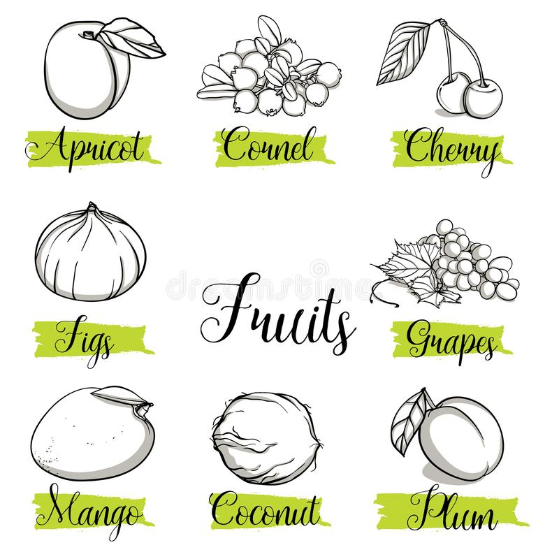 Hand drawn sketch style fruits, nuts and berries. Mango, apricot, plum, fig, grapes, cherry, dogwood, coconut. Organic fruit with leaf, vector doodle vector illustration