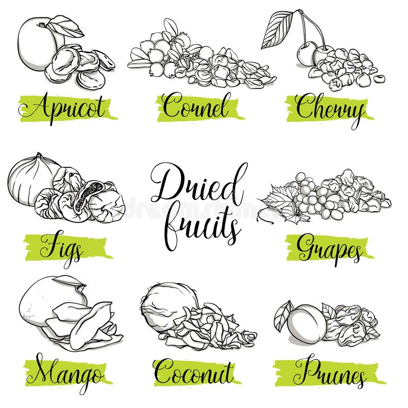 Hand drawn sketch style fruits, nuts and berries. Mango, apricot, plum, fig, grapes, cherry, dogwood, coconut. Organic fruit with leaf, vector doodle stock illustration