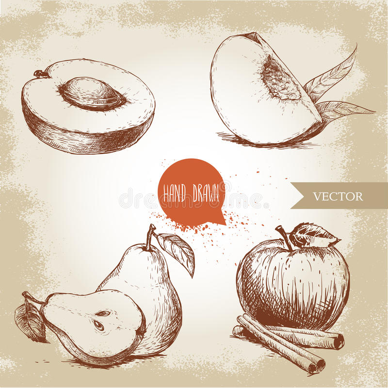 Hand drawn sketch style fruits set. Apricot, peach quarter with leafs, whole pear and half, apple with cinnamon. Eco food vector illustration collection on old vector illustration