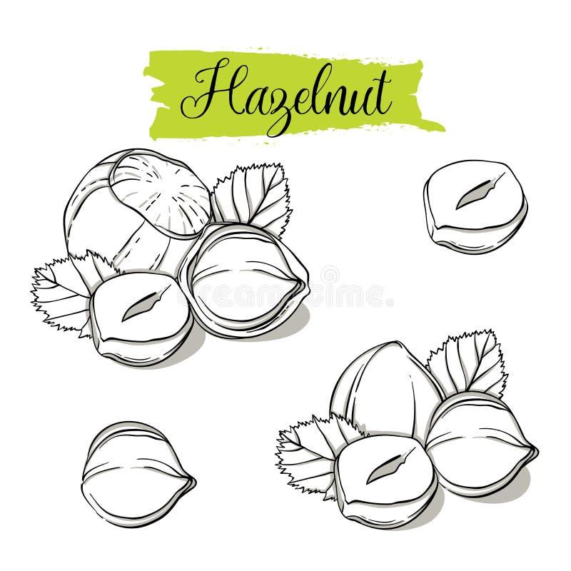 Hand drawn sketch style Hazelnut set. royalty free illustration
