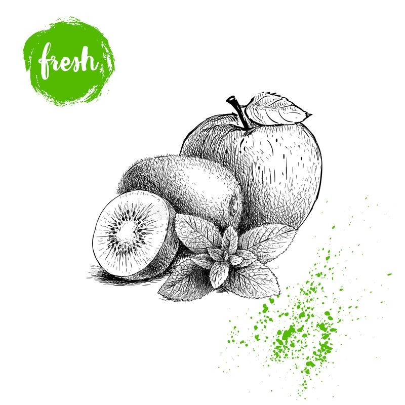 Hand drawn sketch style healthy fruits. Apple, kiwi fruits and mint leaves branch. Vector illustration stock illustration