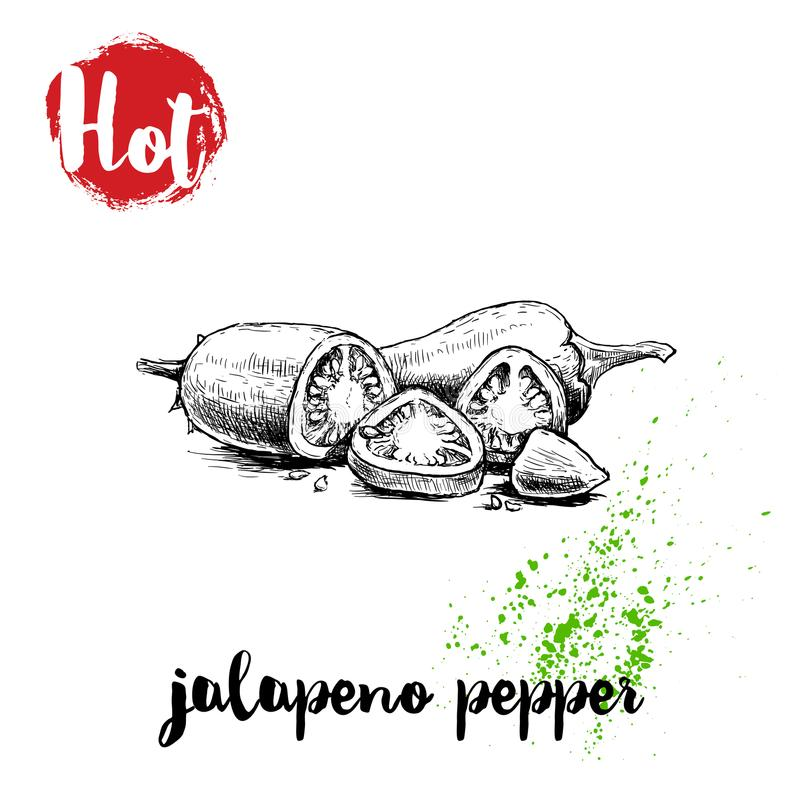 Hand drawn sketch style hot jalapeno pepper whole and cut poster. Red label with hot sign. Vector illustration royalty free illustration