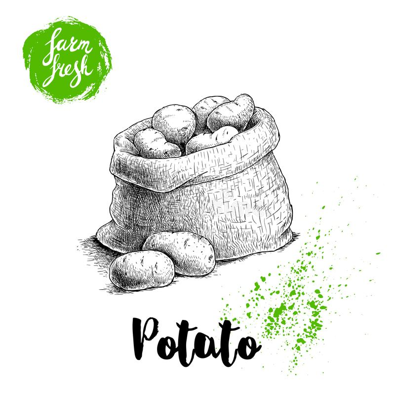 Hand drawn sketch style illustration of ripe potatoes in burlap bag. Farm fresh vector illustration poster. royalty free illustration