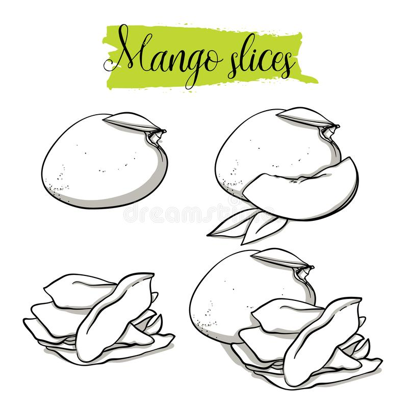 Hand drawn sketch style Mango set. Single, group fruits, dried, slices mango. Organic food, vector doodle illustrations collection isolated on white background vector illustration