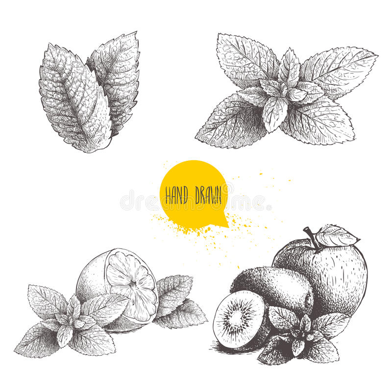 Hand drawn sketch style mint illustrations set. Mint leafs, lemon or lime fruit with peppermint, apple, kiwi fruits with mint leaf. S. Herbal healthy product stock illustration