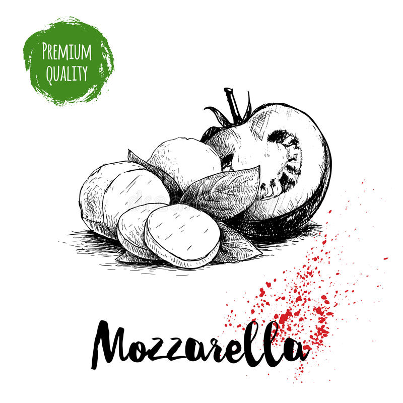 Hand drawn sketch style mozzarella cheese with basil leafs and half of tomato. Caprese salad ingredients. Vector organic food illu vector illustration