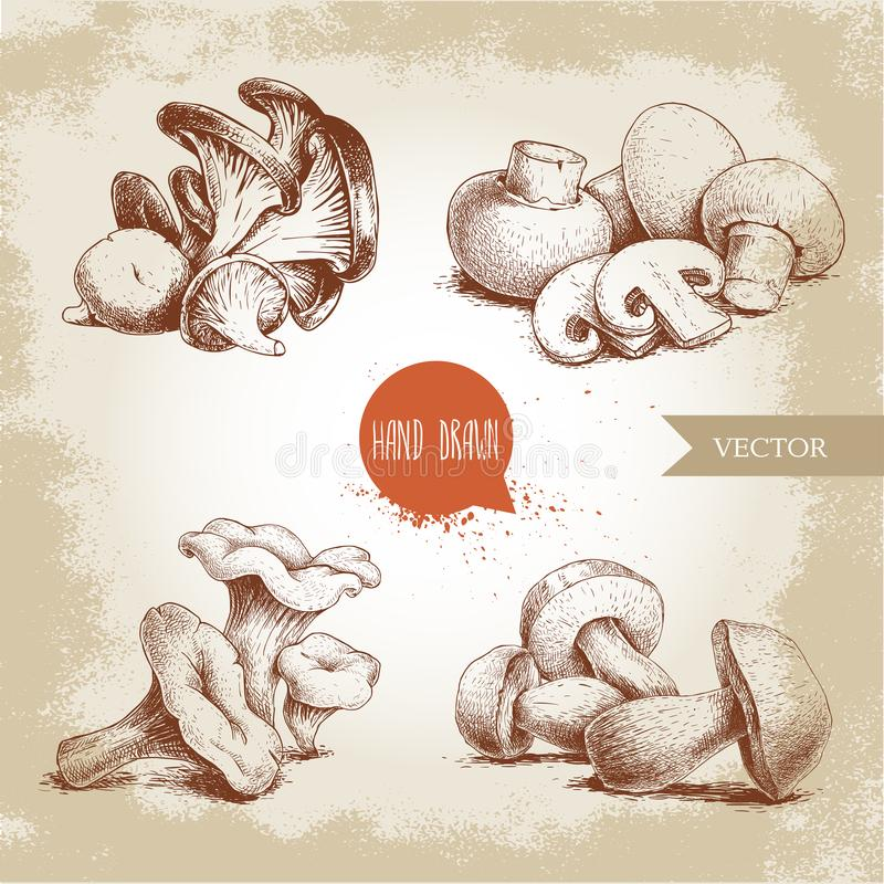 Hand drawn sketch style mushrooms compositions set. Champignon with cuts, oysters, chanterelles and porcini mushrooms. Organic eco raw food vector vector illustration