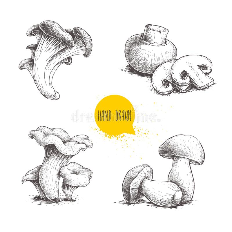 Hand drawn sketch style mushrooms compositions set. Champignon with cuts, oysters, chanterelles and porcini mushrooms. Organic fre. Sh farm food vector vector illustration